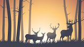 picture of horny  - Vector horizontal illustration of wild deer in forest sunset - JPG