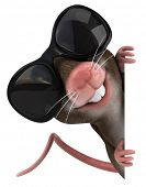 image of gerbil  - Mouse - JPG