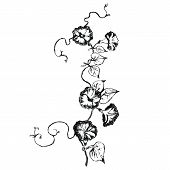 picture of loach  - Loach flowers sketch - JPG