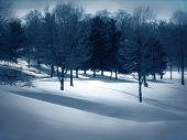 pic of blanket snow  - blanket of snow under trees  - JPG