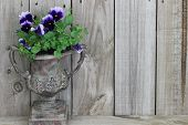 foto of planters  - Antique vase with purple flowers  - JPG