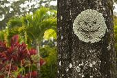 image of garden eden  - Smiley face growing on a tree at the Garden of Eden in Maui - JPG