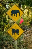 pic of oxen  - Elephant and Ox warning signs on the road, Thailand.