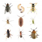 Garden pests. Collection of the insects on a white background.