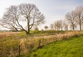 picture of dike  - Typical Dutch landscape with a dike and bare trees in the early spring season - JPG