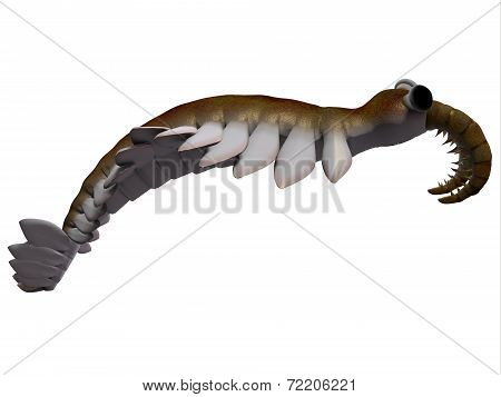 Cambrian Anomalocaris Side Profile