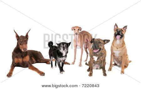 Five Dogs Over White
