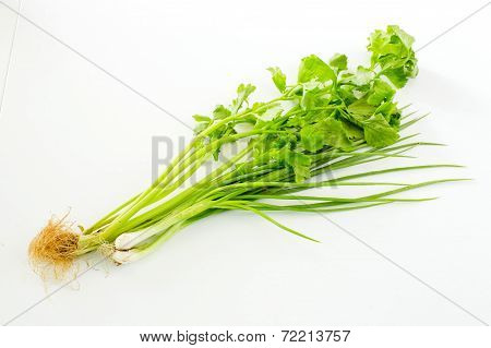 Organic Celery ( Leaves Of Celery)