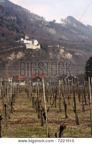 Vaduz Castle And Vineyard