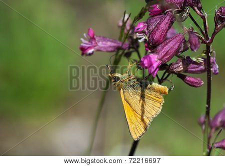 Orange Butterfly On A Purple Flower