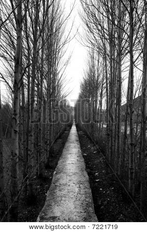 Endless Trees