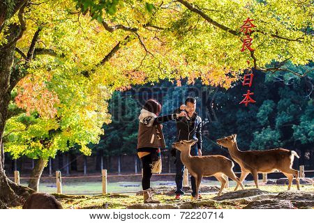 Nara Part At Fall