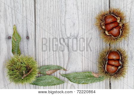 fresh chestnuts bur