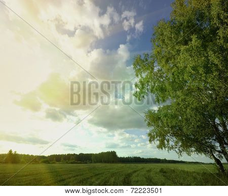 Summer Sky Tree Field