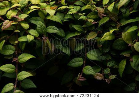 Frame Of Leaves