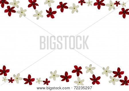 red and white rangoon creeper on white background