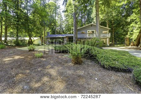 House In The Woods. Summer Time In Washington State