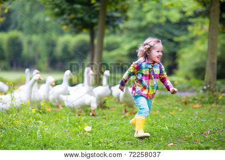 Little Girl Playing With Geese