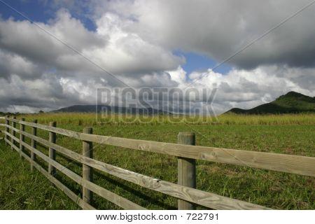 Farm In Kauai