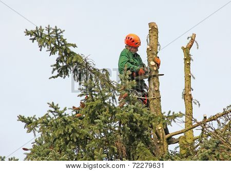 Lumberjack In The Tree Top
