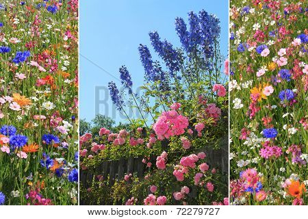 Triple Summer Flowers