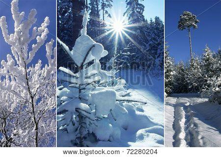 Triple - Winter Forest