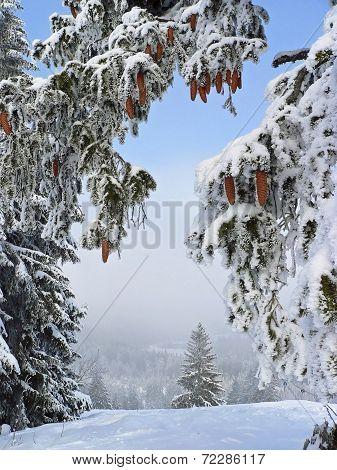Winter Wonderland, Snowy Forest Glade