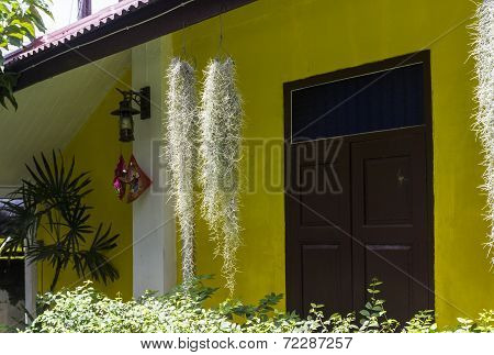 Spanish Moss In Front Of Yellow House