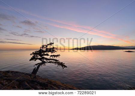 Lighthouse Park - Juniper Point