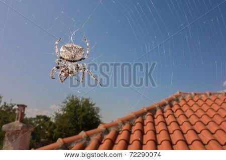 Spider & Wasp