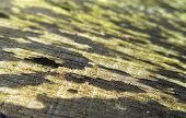 stock photo of face-fungus  - full frame abstract detail of a wooden cut face - JPG