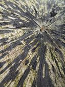 picture of face-fungus  - full frame abstract detail of a wooden cut face - JPG