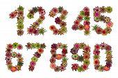 stock photo of bromeliad  - Numbers of bromeliad flowers - JPG