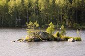picture of backwoods  - Beautiful and clean lakes and forests of Finland - JPG