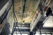 pic of abandoned house  - Mold growth and water stains on the ceiling of an abandoned house - JPG
