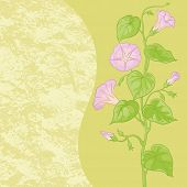 picture of ipomoea  - Floral pattern - JPG