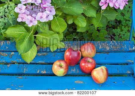 Sweet Apples On Wooden Garden Chair