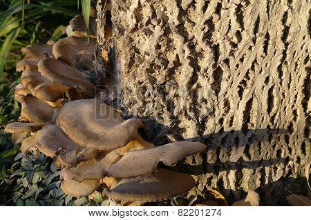 Polypore On Stub