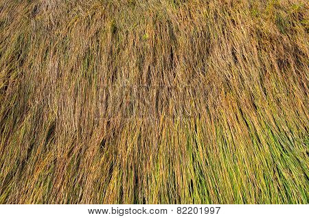 Background Of Long Grass Texture