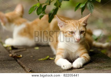 Ginger tabby kitten and his brother lying on ground.