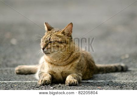 Cat sitting on ground and closing eyes to take a break in Taiwan, Asia.