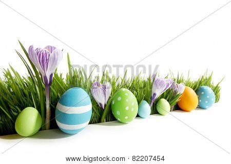 Row of Easter Eggs in fresh green grass with crocus flowers isolated on white background