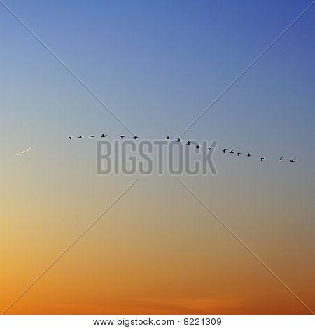 Ducks In Flight, Sunset