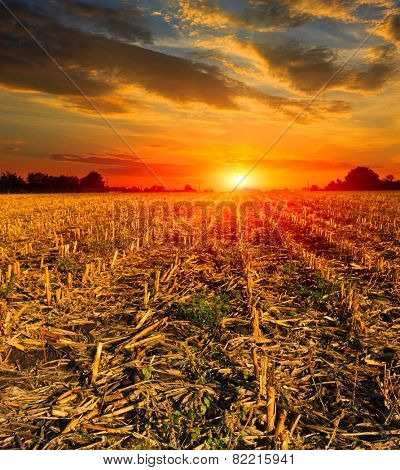 Sunset over harvested field at autumn time