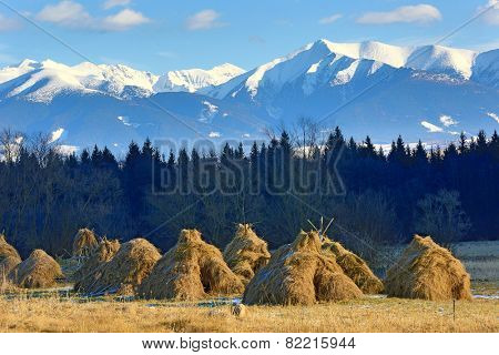 haystack's on meadow against Tatra Mountains background in Slovakia