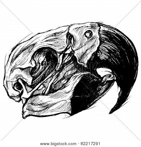 Macaw Skull Drawing line work vector