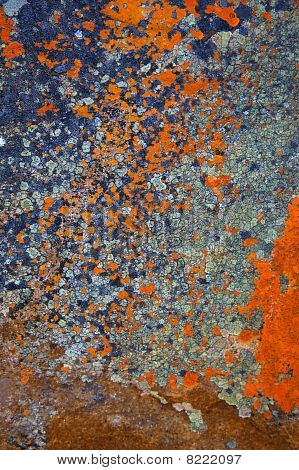 Lichen Abstracts