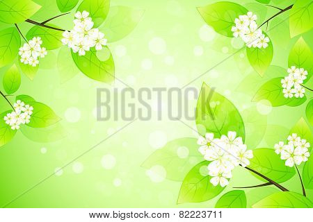 Framing With Blossom
