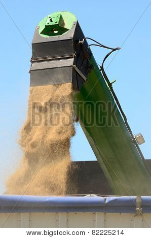 Loading Grain in a Trailer