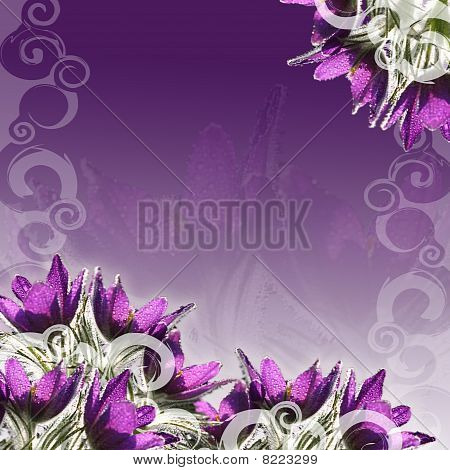 Pasque-flowers background